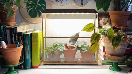 Modern Sprout, home, plants, greenery, grow kits, herbs, Patrick and Company